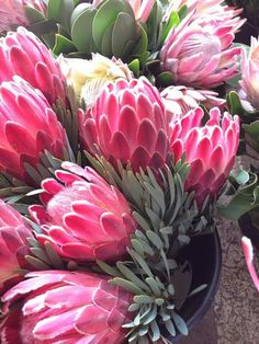 Proteas are beautiful plants which are easy to grow outside. They are a great idea for a balcony garden, backyards, containers and pots. Flor Protea, Protea Flower, Exotic Flowers, Beautiful Flowers, Australian Native Flowers, Raindrops And Roses, 3d Rose, Fruit Plants, Pink Garden