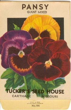 Vintage Flower Seed Packet Lithograph by Tuckers' Seed House in Carthage MO PANSY Vintage Flower Seed Packet Lithograph by Tuckers' Seed House in Carthage MOPANSY Vintage Flower Seed Packet Lithograph by Tuckers' Seed House in Carthage MO Vintage Labels, Vintage Ephemera, Vintage Cards, Vintage Images, Vintage Pictures, Garden Catalogs, Seed Catalogs, Seed Art, Vintage Seed Packets