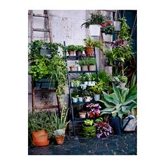 A plant stand in the shape of a ladder. Filled with plant pots in terracotta and galvanized steel and green plants. Ikea Outdoor, Outdoor Plants, Outdoor Plant Stands, Green Plants, Potted Plants, Plant Pots, Ikea Exterior, Ikea Garden Furniture, Balcony Furniture