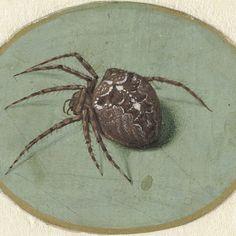 Spider, Jan Augustin van der Goes, 1690 - 1700 - Rijksmuseum Street Art, Amazing Spider, Art Plastique, Science And Nature, Zoology, Natural History, Art History, Renaissance, Creepy