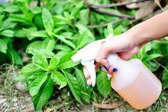 Szódabikarbóna természetes felhasználása a kertben