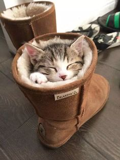 Looks pretty cozy in that ugg boot