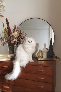 Ideas Cats Fluffy Gatos For 2019 Crazy Cat Lady, Crazy Cats, I Love Cats, Cute Cats, Adorable Kittens, Animals And Pets, Baby Animals, Cute Animals, Cat Aesthetic