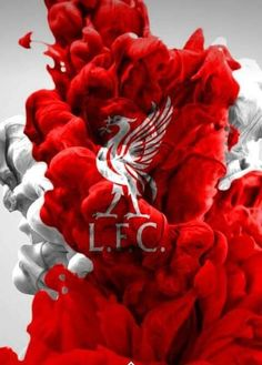 Liverpool Fc Team, Liverpool Fc Champions League, Liverpool Tattoo, Liverpool Anfield, Lfc Wallpaper, Liverpool Fc Wallpaper, Liverpool Wallpapers, Germany National Football Team, Best Football Team