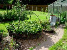 Картинки по запросу красивые грядки земляники клубники в саду