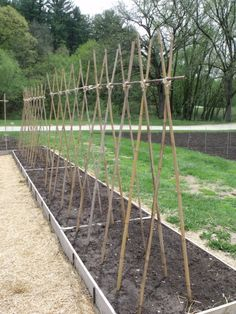 Long Bamboo Wall Trellis