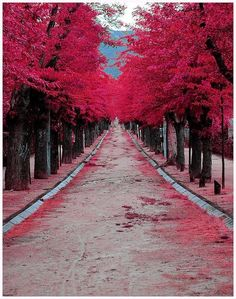 Burgundy Street Madrid, Spain
