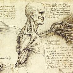 72. Sheet of Studies, c.1510-11, Pen and ink with wash, over black chalk, 29.2 x 19.8 cm