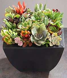 A mini succulent garden.  Easy to maintain, textured, and colorful.