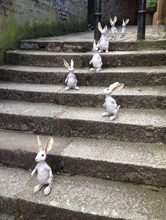 Rory Dobner #bunnies