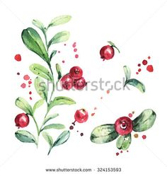 Set of wild northern berries. Lingonberry, foxberry, cowberry, cranberry. Watercolor painting - stock photo