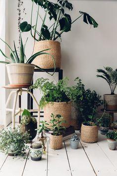 Beautiful plant area!