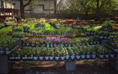 Tips & Advice for Planting Summer Annuals | Aspen Lawn and Landscape