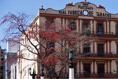 La Real Fábrica de Tabacos Partagás es la mas antigua y famosa de La Habana y fue fundada en 1845 por el español Jaime Partagás. En ella trabajan en la actualidad más de 400 cigarreros y cigarreras que producen algunas de las marcas de puros mas famosas de Cuba, como Montecristo o Cohiba.