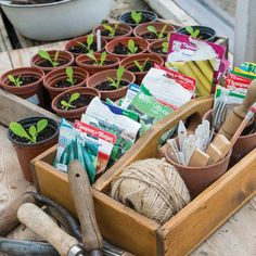 Use our tips to start seeds indoors now and kick off your superproductive, unique and money-saving garden.