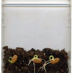Seeds in a CD Case