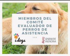 Después de un fin de semana lleno de emociones y #SonrisasQueDejanHuella, siguen las #buenas noticias. Las profesionales de #idogs hemos sido nombradas oficialmente por la Conselleria de Igualdad y Políticas Inclusivas como miembros del comité de calificación para la evaluación y el reconocimiento de perros de asistencia en la Comunitat Valenciana.👏👏 #gva #IgualdayPoliticasInclusivas #PerroDeAsistencia #PerroDeTerapia #DiversidadFuncional #Valencia #Entrenamiento #Perro…