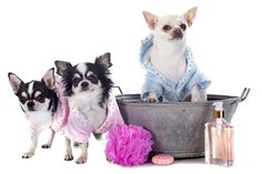 86 best pet grooming images on pinterest grooming dogs cat kennel you can accomplish this by having your dog professionally groomed on a regular basis please solutioingenieria Images