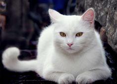 Pisica mea Maya :3
