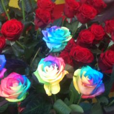 Rainbow roses....the coolest thing ever