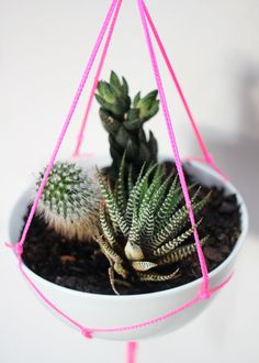 Neon Planter  Image Via: Drifter & The Gypsy