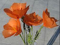 California Poppies Tissue Paper Flower Craft