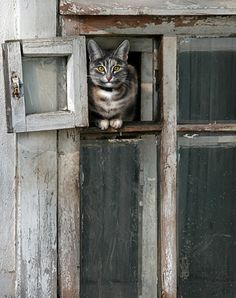 great off-center photo of cat in tiny window