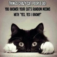 Not crazy at all... IMO. >^.^