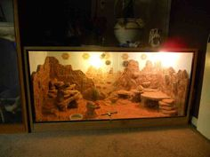 bearded dragon habitat | Bearded dragon pair + Custom Viv 4x4x2-dscn0439.jpg