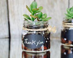 succulent favors wedding favour plants mini succulent