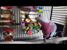 Turn Your Treat Cage Into an Enrichment Powerhouse. – Parrot Up