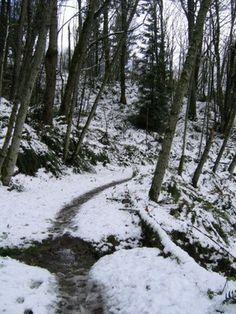 Anti-Aircraft Peak — Washington Trails Association