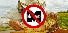 It is time for American leaders to listen to the dozens of other countries that have banned GM food.At last some courageous politicians prepared to grasp the nettle - bravo !