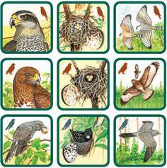 zvieratá Forest Animals, Woodland Animals, Montessori, File Folder Activities, Forest Theme, Bird Theme, Worksheets For Kids, Science For Kids, Animals For Kids