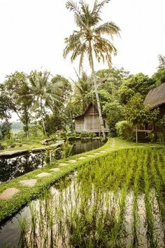 The Vogue Living edit: where to stay in Bali: Bambu Indah, Ubud House Front Porch, Cottage Fireplace, Bali Resort, Bamboo Structure, Bamboo House, Outdoor Bathrooms, Vogue Living, Farm Stay, Tropical Houses