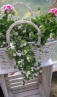 Window Box Plants, Window Box Flowers, Window Planter Boxes, Flower Boxes, Container Flowers, Flower Planters, Container Plants, Container Gardening, Beautiful Flower Arrangements