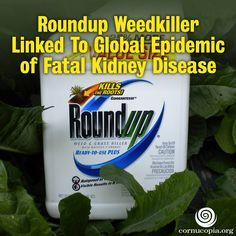 The mystery of what is causing thousands to die each year from a fatal kidney disease may now be solved, with evidence pointing to the world's most heavily used herbicide Roundup (glyphosate) as the primary culprit. More here: http://www.cornucopia.org/2014/03/11548 #roundup #contamination