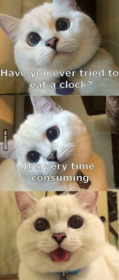 Picture # 278 collection funny animal quotes pics) for June 2016 – Funny Pictures, Quotes, Pics, Photos, Images and Very Cute animals. Humor Animal, Funny Animal Jokes, Funny Cat Memes, Cute Funny Animals, Animal Quotes, Funny Animal Pictures, Cute Baby Animals, Funniest Jokes, Hilarious Pictures