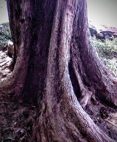 Nature and art – Community – Google+