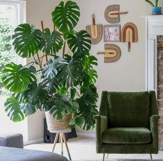 How to take care of a Monstera Deliciosa – plant life - Dekoration Ideen 2019 Monstera Deliciosa, House Plants Decor, Plant Decor, Living Room Plants Decor, Hanging Plants, Indoor Plants, Potted Plants, Garden Plants, Interior Design Living Room