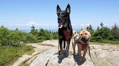 Acadia National Park in Maine--Dog Friendly Acadia National Park Camping, Grand Canyon Camping, Yellowstone Camping, Niagara Falls Camping, Camping San Sebastian, Vacations In The Us, Dog Friendly Hotels, Winter Camping, Winter Road