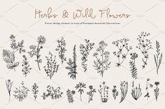 Herbs & Wild Flowers. Set by olga.korneeva on @creativemarket