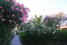Sentiero fiorito a Capo Ceraso Resort Olbia Sardegna