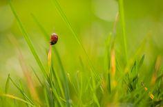 macrofotografie tipsEen lieveheersbeestje in de voortuin, gewoon wat je tot je beschikking hebt voor de fotografie – 1/250 – f/3.8 – ISO100 – 85mm – uit de hand en steunend op de grond