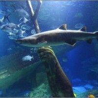 Avant garde challenge on 'Project Runway: All Stars' at Long Island Aquarium   Maxine Nelson - Tampa TV Examiner