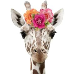 Giraffe & Flowers