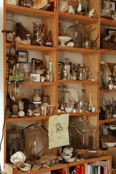 I love shelves like this that are crammed with fascinating objects - you can stare at them forever finding things you didn't see before.