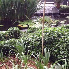 Favorite Place For My Meditation. Dixie Brune · Prayer Garden Ideas
