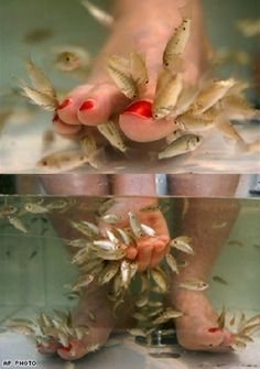 1000 images about fish pedicure on pinterest fish for Fish eating dead skin pedicure