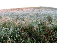 geopsych:   We saw these hills: they were covered... - - ̗̀can i pet ur dog ̖́-
